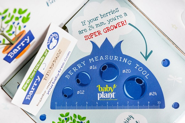 Berry-measuring-tool