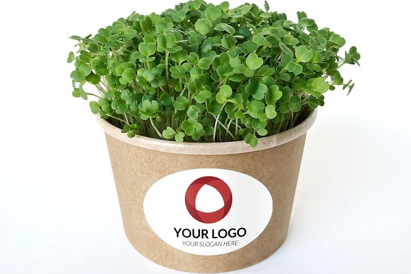 cress-your-logo-1