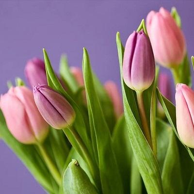 tulpen in bloei 400